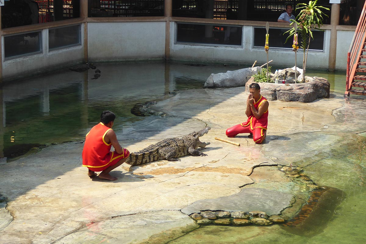 Samutprakarn Crocodile Farm Bangkok Tourist attraction in Bangkok