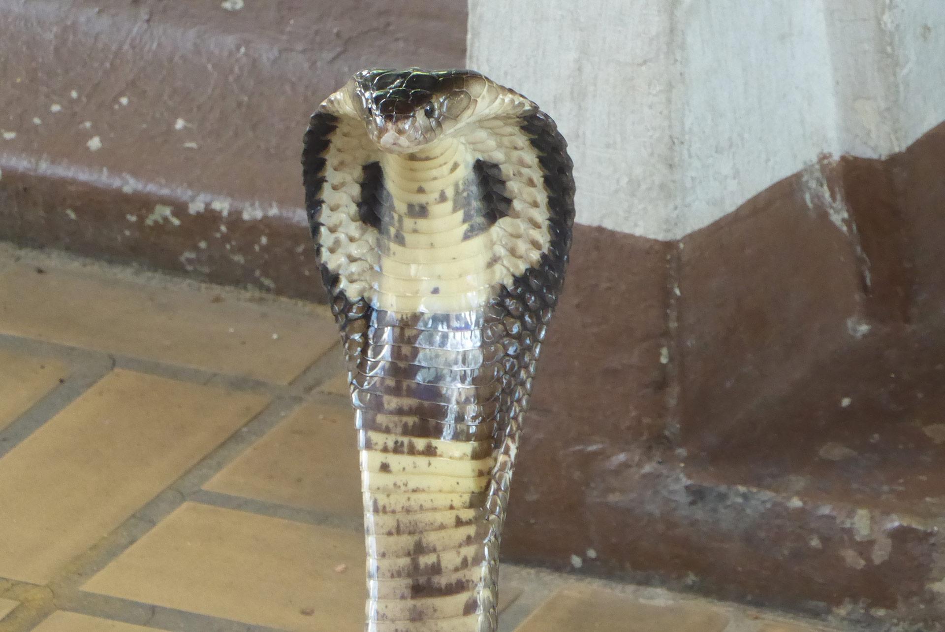 The Snake Farm (Queen Saovabha Memorial Institute) Bangkok