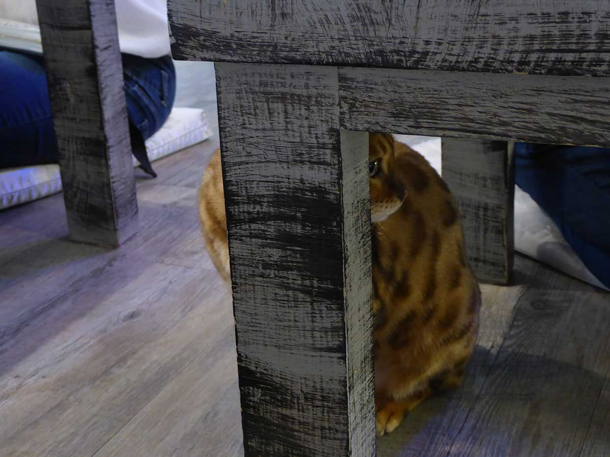 Theme Cafes in Bangkok Caturday Cafe