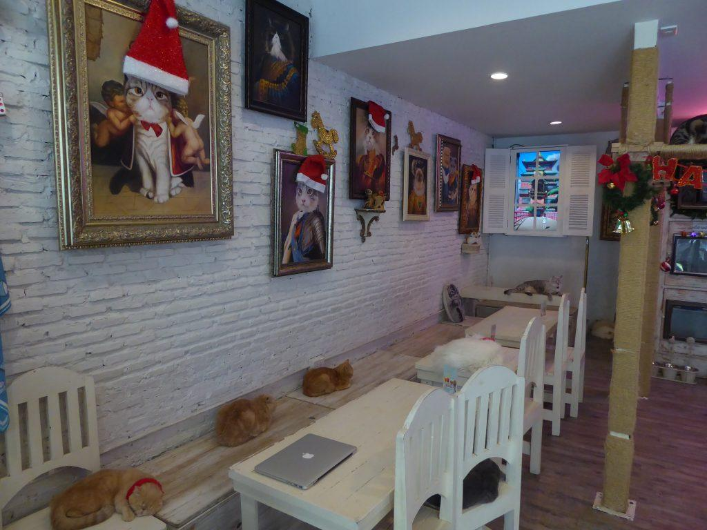 Caturday Cafe Cat Cafe in Bangkok
